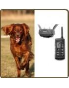 Collier de dressage, accessoires chien chasse
